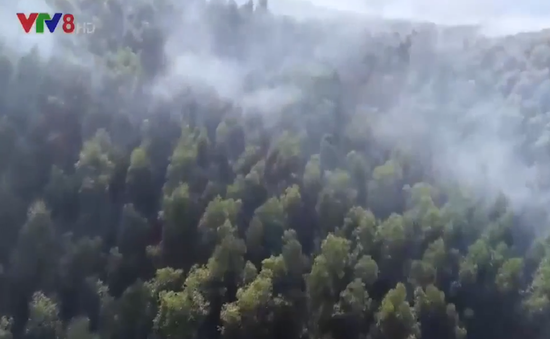 Phú Yên: Cần đưa ra lệnh cấm người vào rừng để hạn chế cháy rừng