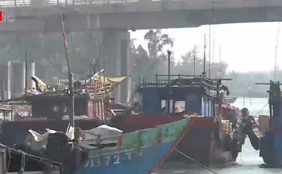 Nợ tiền đóng tàu cá, ngư dân bị ngân hàng kiện