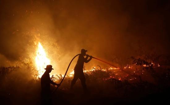 Indonesia bắt 185 nghi phạm gây cháy rừng