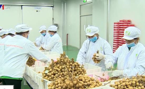 """Vừa xuất khẩu, nhãn Việt đã bị Australia """"tuýt còi"""""""