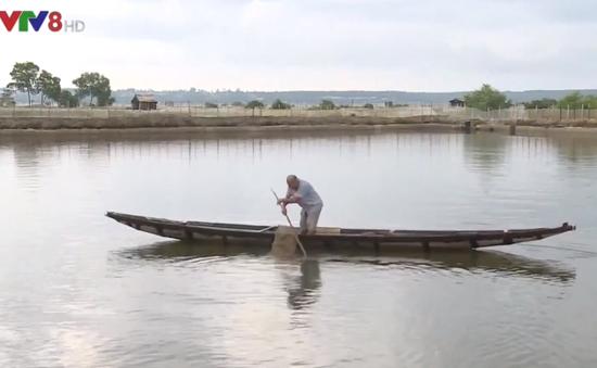 Thừa Thiên Huế: Khẩn trương thu hoạch hải sản tránh lũ