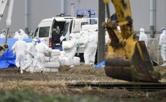 Nhật Bản tiêm vaccine để ngăn dịch tả lợn