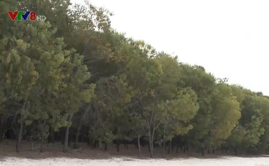 Quảng Nam giữ rừng phòng hộ ven biển