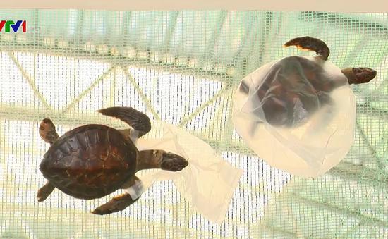 Bảo vệ rùa biển trước mối nguy rác thải nhựa