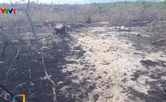 Hơn 200 hecta rừng phòng hộ tại Bình Định bị tàn phá