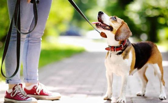 Australia phạt 4.000 AUD nếu không dắt chó đi dạo mỗi ngày