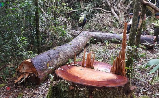 Phát hiện thêm một vụ phá rừng tại Kon Tum