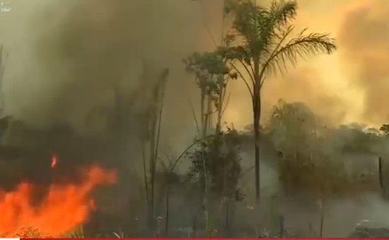 Thêm 2.000 đám cháy mới ở Amazon dù Brazil cấm đốt nương làm rẫy