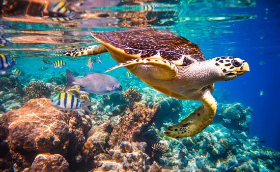 Hảo Hảo bật mí bí quyết để bạn và người thương đu đưa Maldives thuận lợi