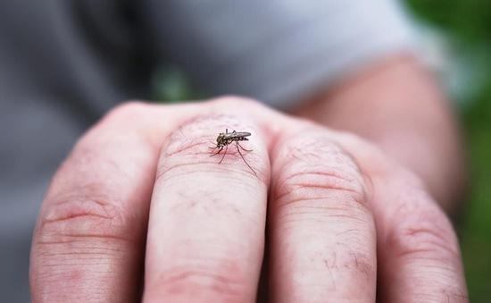 Tiêm thuốc này vào người, muỗi sẽ bị tiêu diệt ngay lập tức