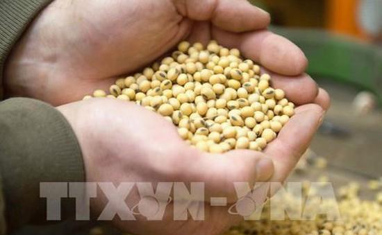 FAO: Giá lương thực giảm tháng thứ ba liên tiếp