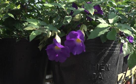 """Hoa hạnh phúc đang """"hot"""" tại làng hoa Sa Đéc"""