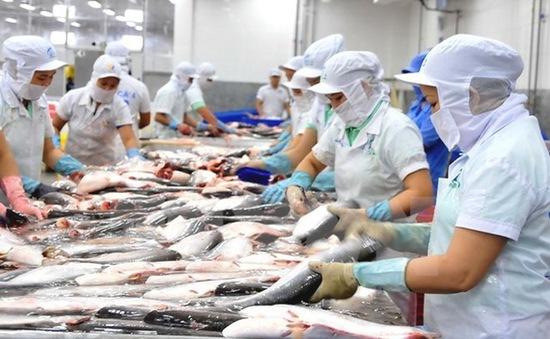 Cá tra Việt Nam sẽ gặp áp lực cạnh tranh lớn