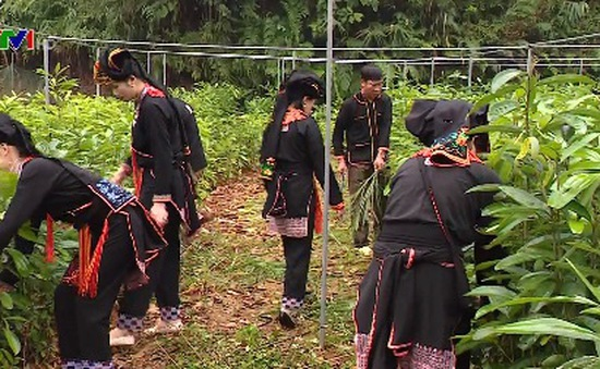 Huyện Văn Yên (Yên Bái) nỗ lực thoát nghèo từ nội lực