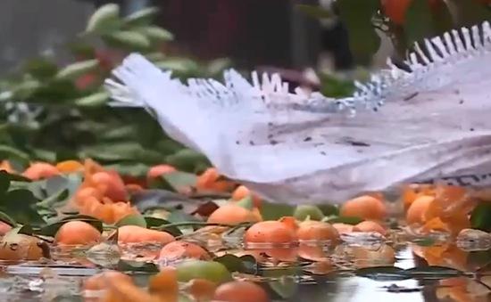 Người buôn cây cảnh thiệt hại nặng sau trận mưa lớn đêm Giao thừa