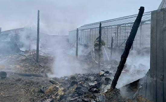 Vụ cháy nhà kính ở Nga: ĐSQ Việt Nam tại Nga xác minh thông tin người Việt gặp nạn
