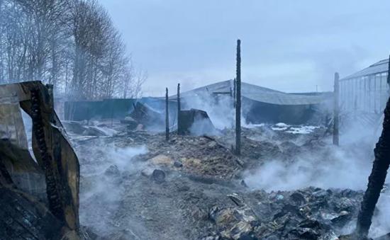 Vụ cháy nhà kính ở Nga: Nguyên nhân có thể do chập điện