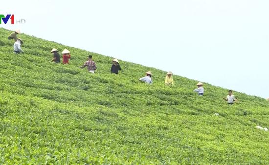 Tuyên Quang đẩy mạnh phát triển nông nghiệp hàng hóa