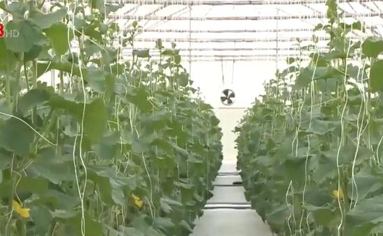 Nông nghiệp thông minh, kinh nghiệm từ Kon Plông