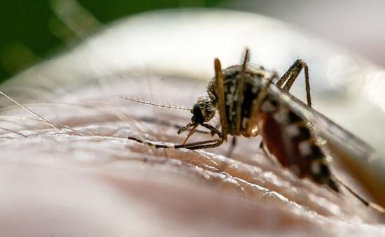 Ký sinh trùng sốt rét ẩn náu trong máu vào mùa khô
