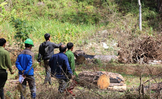 Xác định 6 đối tượng tình nghi phá rừng phòng hộ tại Lâm Đồng