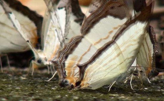 Sắc màu của bướm và những điều có thể bạn chưa biết