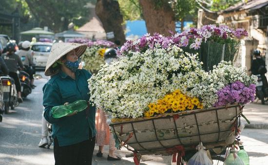 Cúc họa mi đẹp tinh khôi gọi đông về trên phố Hà Nội