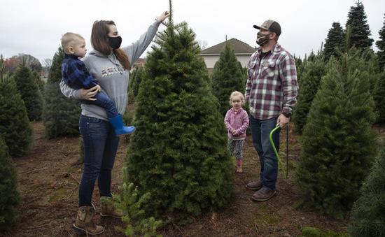 Chán nản vì COVID-19, đổ xô đi mua cây thông Noel sớm
