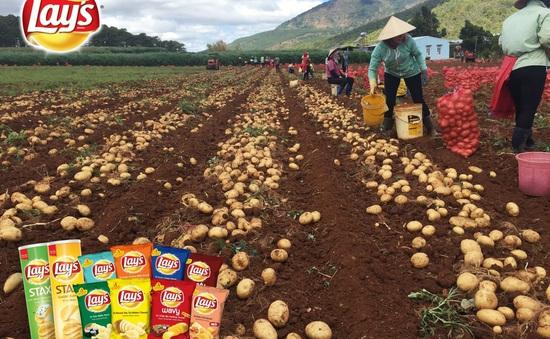 PepsiCo phát triển khoai tây nội địa để sản xuất sản phẩm chất lượng quốc tế