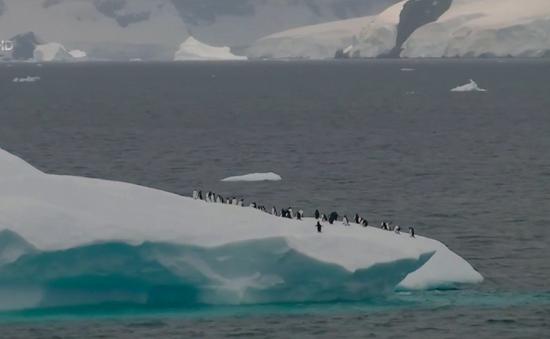 Giảm số lượng chim cánh cụt do biến đổi khí hậu