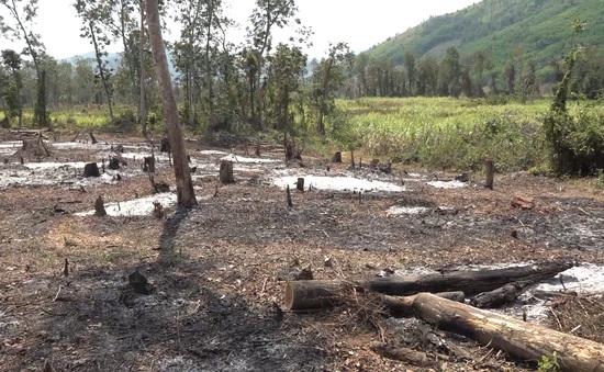 Người dân không dám phản ảnh tình trạng phá rừng phòng hộ