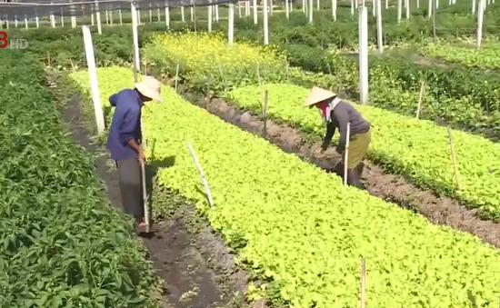 Thừa Thiên - Huế phát triển rau màu trên vùng đất cát