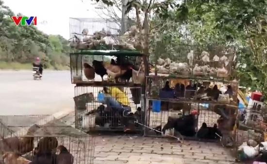 Khi động vật hoang dã kêu cứu
