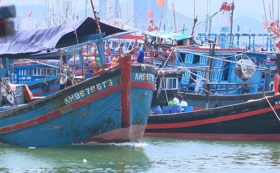 Ngư dân bị nợ tiền - hệ lụy khi xuất khẩu cá ngừ gặp ách tắc