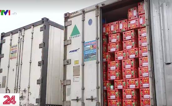 3.000 tấn thanh long ùn tắc tại cửa khẩu Lào Cai