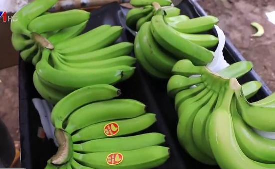 Các doanh nghiệp logistics hỗ trợ trữ hàng nông sản xuất khẩu