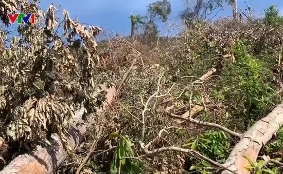 Hơn 5ha rừng ở Đắk Lắk bị tàn phá