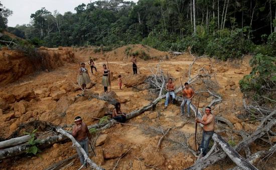 Tình trạng phá rừng Amazon lên mức kỷ lục