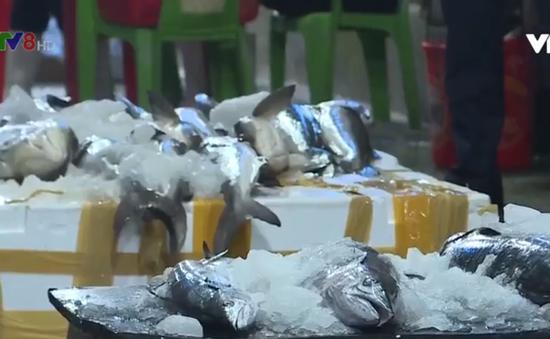 Quảng Bình được mùa hải sản
