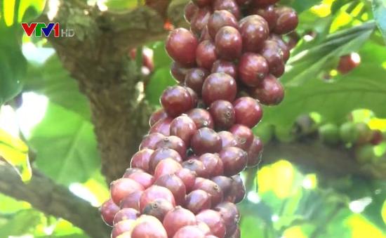 Xây dựng chuỗi giá trị cà phê Việt