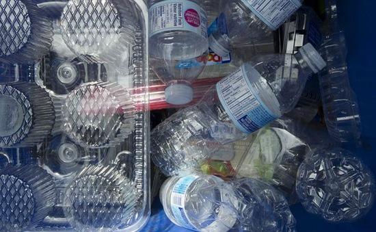 Canada liệt nhựa là chất độc hại