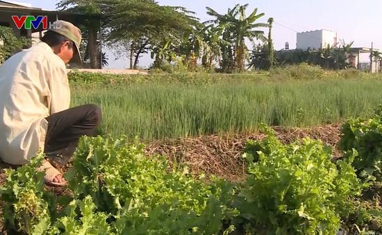 Hiệu quả từ trồng rau màu thích ứng với nắng hạn ở TT-Huế