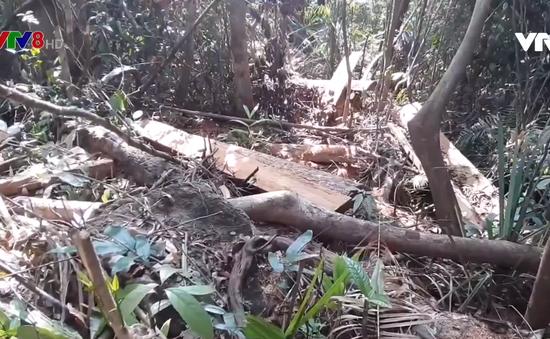 Phát hiện vụ phá rừng tại Quảng Nam