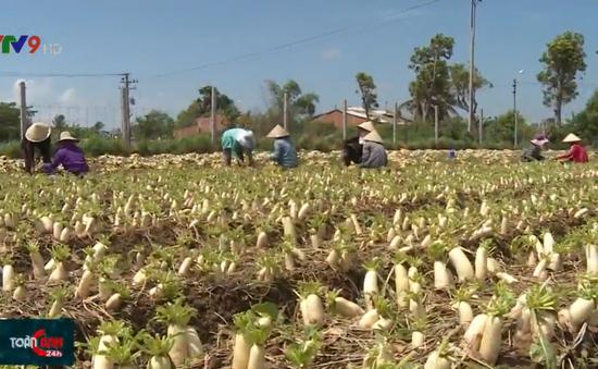 Chuyển đổi cây trồng hợp lý, người dân có thu nhập ổn định trong mùa khô hạn