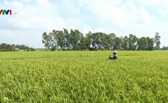 Doanh nghiệp ĐBSCL hỗ trợ nông dân vượt khó