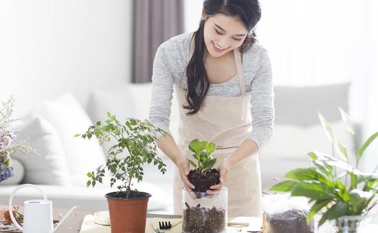 Bí quyết trồng cây xanh trong nhà