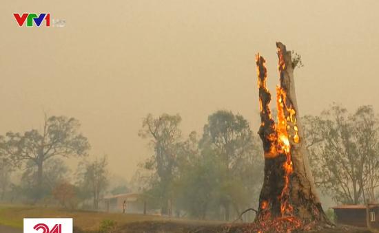 Australia dập tắt các đám cháy rừng ở New South Wales