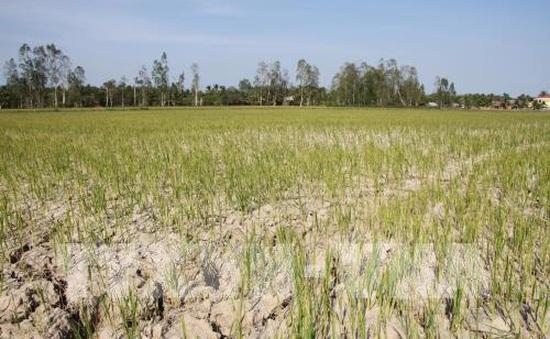 Hơn 20.800 hộ dân Cà Mau thiếu nước sinh hoạt
