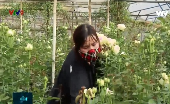Cần cơ chế hỗ trợ cho nông dân Lâm Đồng
