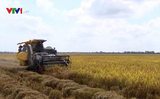 Nông dân Phú Yên, Bình Định được mùa lúa Đông Xuân